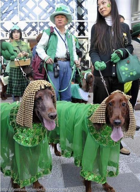 Two funny dog dressed.
