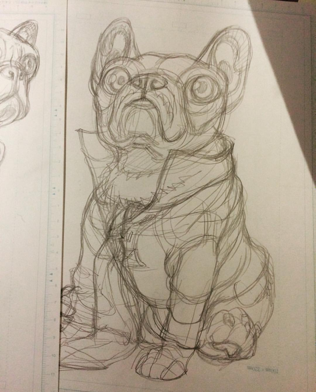 bulledog sketch, rough, illustration future work