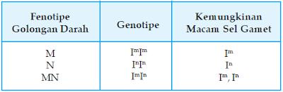 Hubungan antara Fenotipe Golongan Darah Sistem M N, Genotipe, dan Kemungkinan Macam Gamet