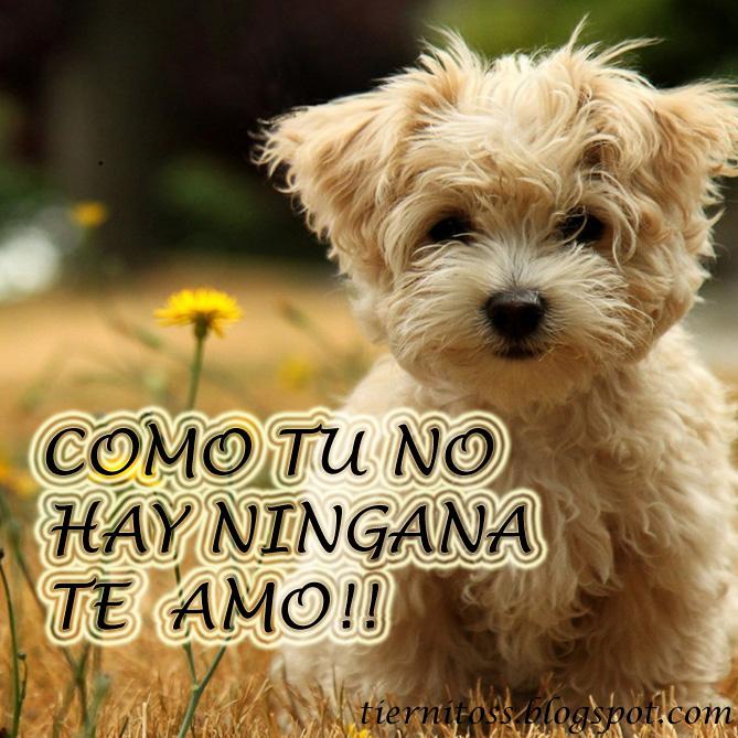 Imagenes de perritos tiernos con frases para facebook gratis