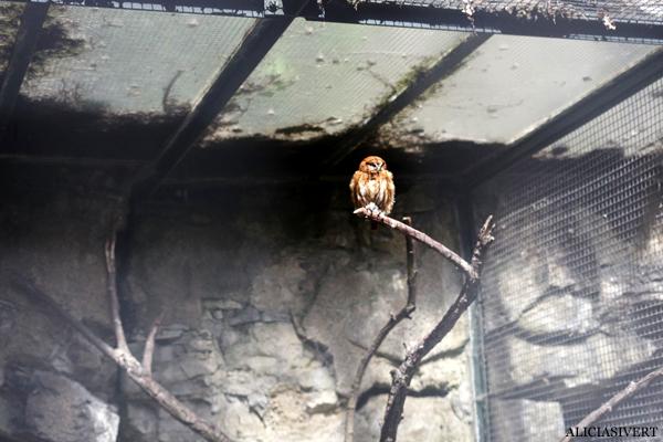 aliciasivert, alicia sivertsson, alicia sivert, berlin zoo, djurpark, djurhållning, instängda djur, djur i bur, cages, animal, animals, cage, bird, fågel uggla, owl