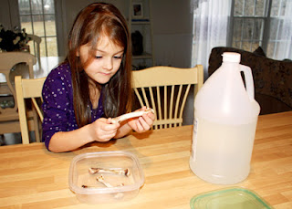 Tessa examined chicken leg bones. She noted that they were strong and hard. Afterward, she placed most of the bones into a container. Then, I filled the container with vinegar. Over time, the vinegar will remove the minerals from the bones and they will become flexible. We will check on them in a couple of weeks.