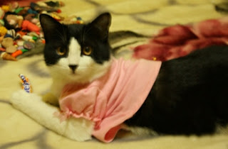 cat in short pink shirt