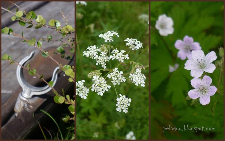 pelaguu.blogspot.com