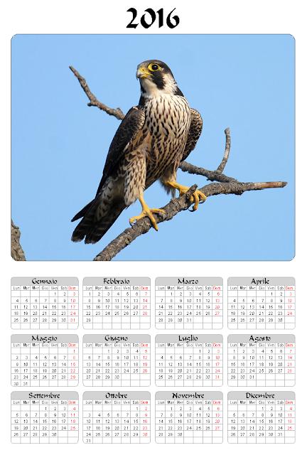 Calendario 2016 - Falco
