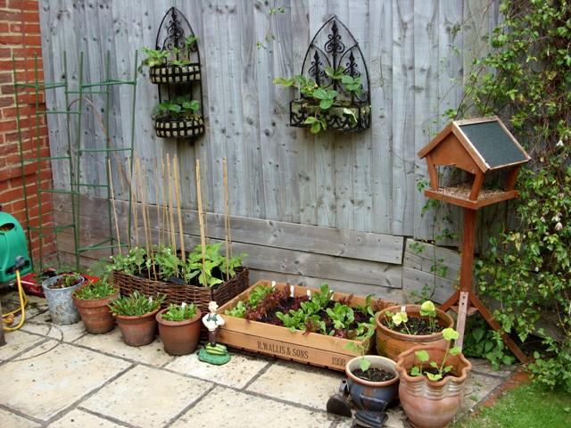 Instant Organic Garden : My garden me instant vegetable