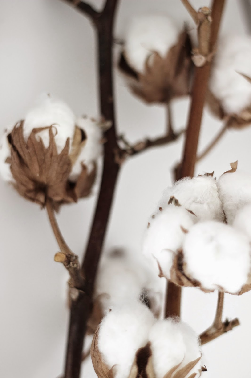 aesop, mason pearson, cotton branches via www.scandinavianlovesong.com