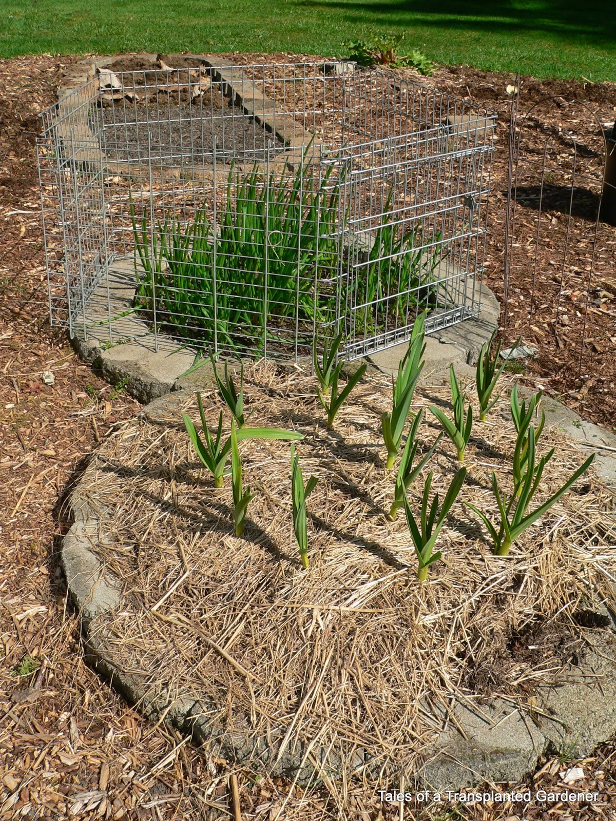 Tales of a Transplanted Gardener
