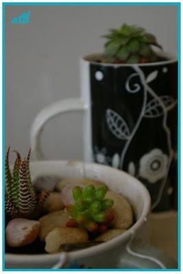 mended-mug-planted