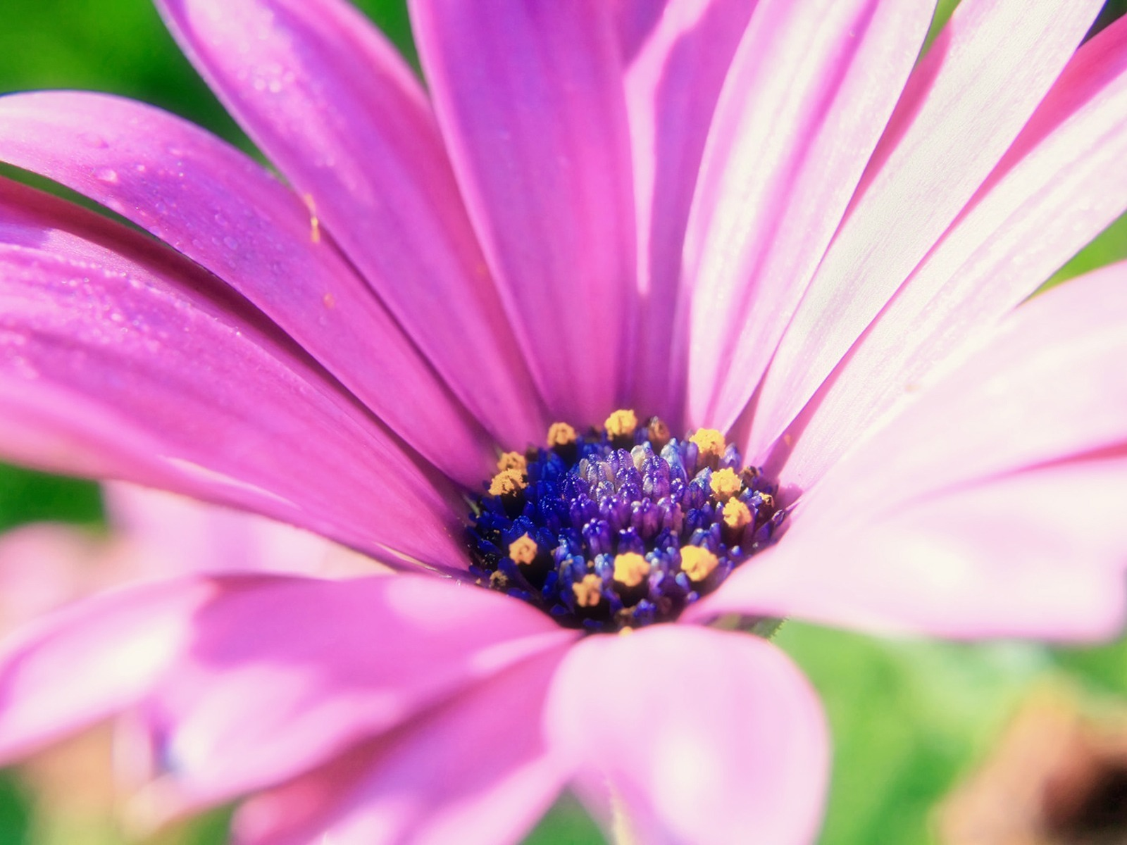 http://2.bp.blogspot.com/-KdcbPzWWA8E/Taitj7C80iI/AAAAAAAAGhA/846i7Id8Jy8/s1600/113_size_1600x1200_pink-flower-1600-1200-3605.jpg