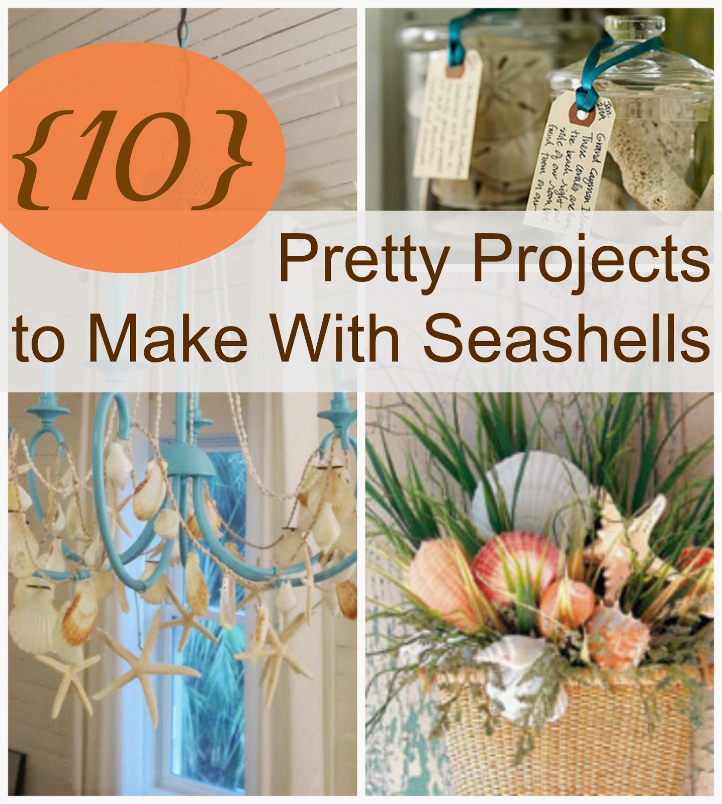 My husband has suggested we don 39 t actually need three - Things to do with seashells ...