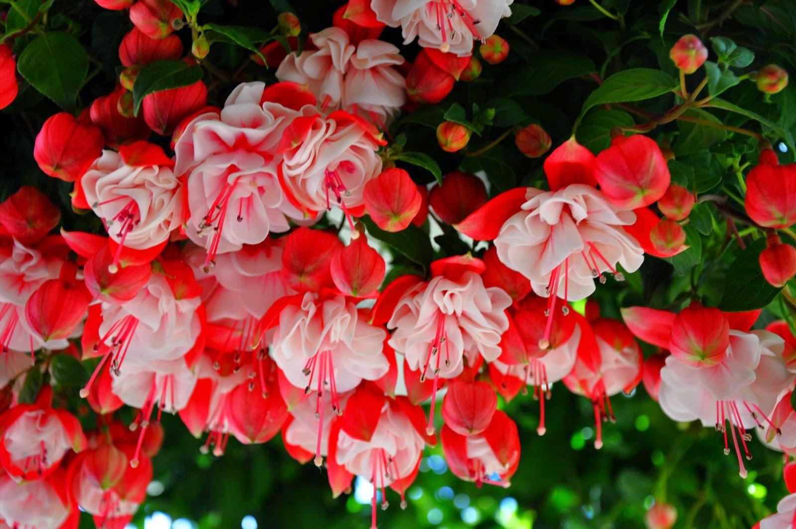 Flower Homes Fuchsia Flowers