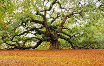 Arbol ángel - Angel Tree (Imágenes Bonitas)