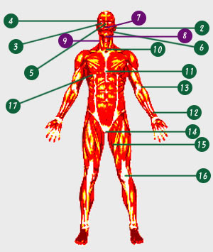 pressure points on the body pdf