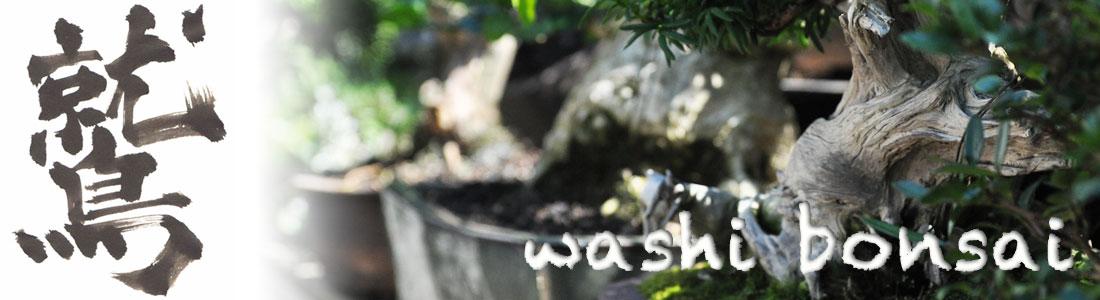 washi bonsai