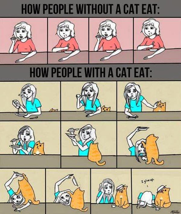 cat owners struggles