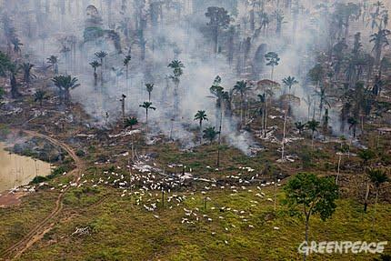 Deforestacion en el amazonia desastre natural
