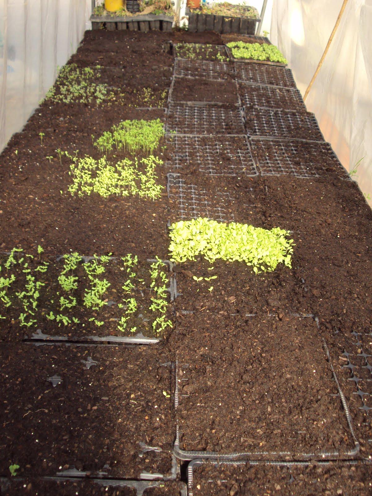 En torno al huerto terreno semillas y flores - Tierra para semilleros ...