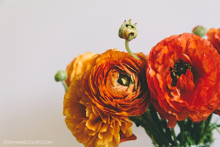 """orange and black ranunculus"""