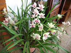 Orchidee 2011