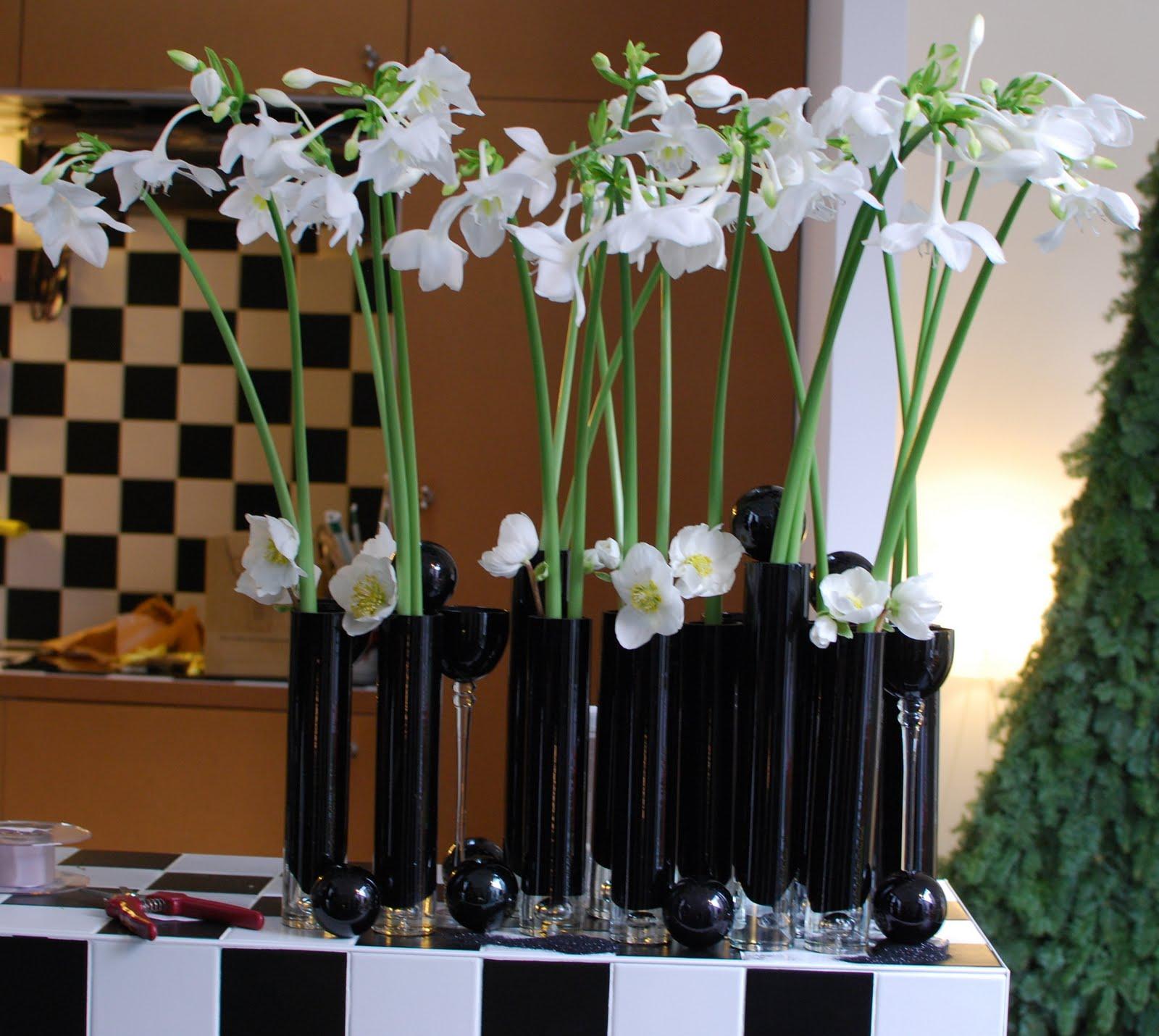 Комнатный цветок эухарис: фото, описание и уход в домашних 71