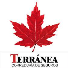 SEGUROS PARA PERROS TERRANEA
