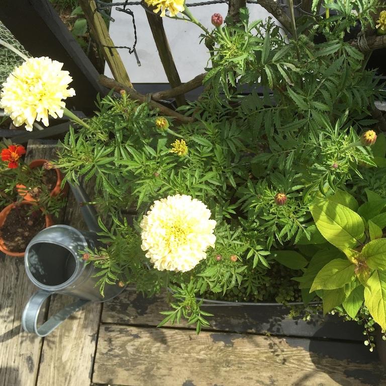 Countryliv: krukker i haven