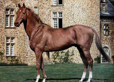 caballos-paisaje