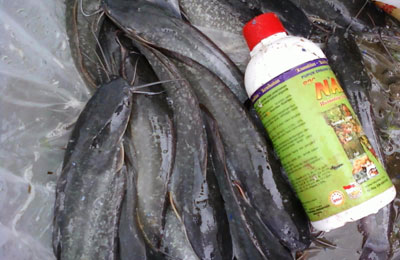Panduan Cara Budidaya Teknis Ikan Lele dengan media Kolam Terpal yang didukung dengan Teknologi Pakan Organik dan Vitamin Organik NASA meliputi Produk Organik POC NASA, HORMONIK, VITERNA Plus (Viterna Cair atau Viterna Serbuk), TON (TambakOrganik Nusantara)