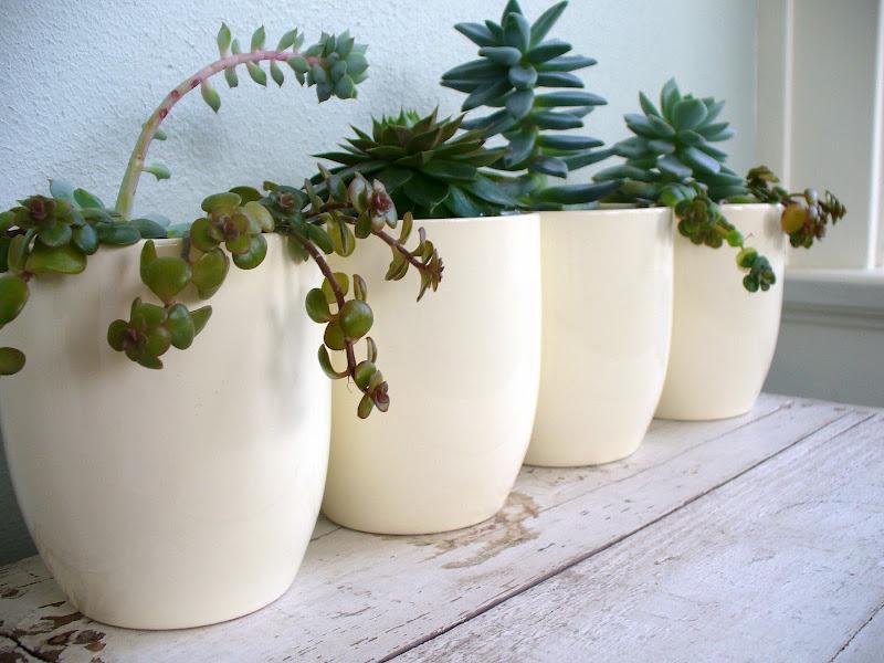 Succulents title=