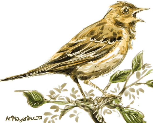 Tree Pipit sketch painting. Bird art drawing by illustrator Artmagenta.
