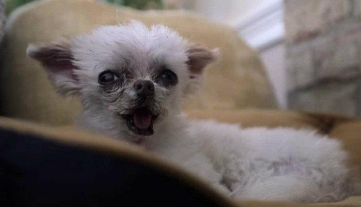 Adopta perros viejos y enfermos para darles mucho amor en - Cercados para perros ...