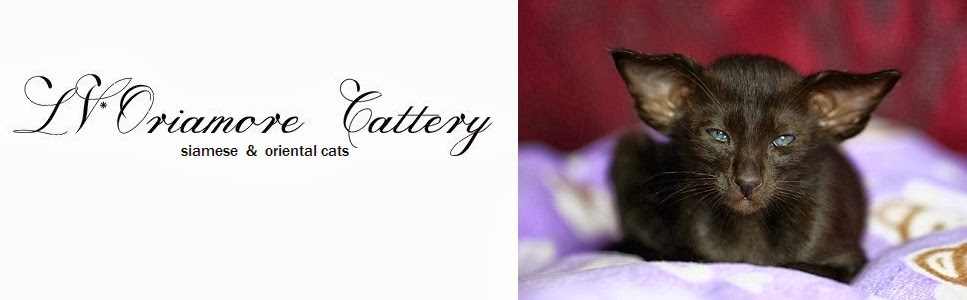 LV*Oriamore cattery