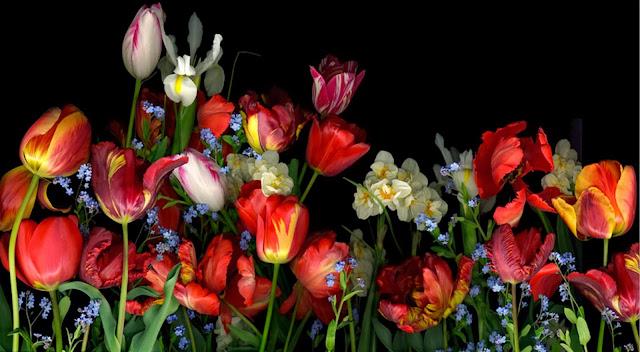 fotos-de-flores-rosas-rojas