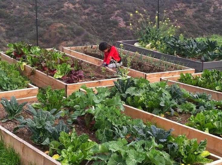 James Cameron cria a primeira escola vegana dos EUA - Muse School
