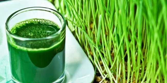 Benefits of Wheatgrass Diet