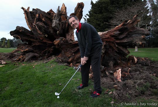 "Kim Southerden, club professional, Napier Golf Club, Waiohiki, Napier, ""playing out"" of a spot near a 170 year-old Silky Oak tree which blew down in the gusty winds this afternoon photograph"