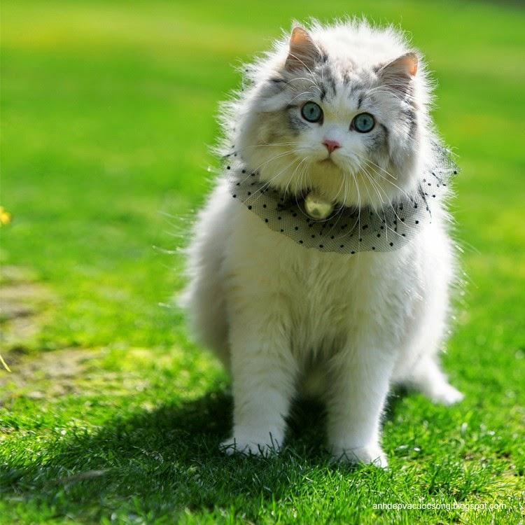 Tiểu thư mèo xinh đẹp 3
