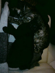 Kattflocken