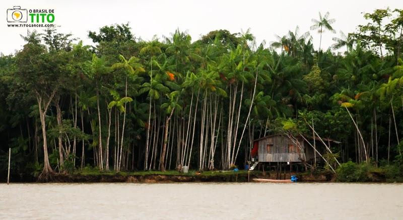 Casa de madeira cercada por açaizeiros na ilha de Paquetá-Açu, em Belém - Pará
