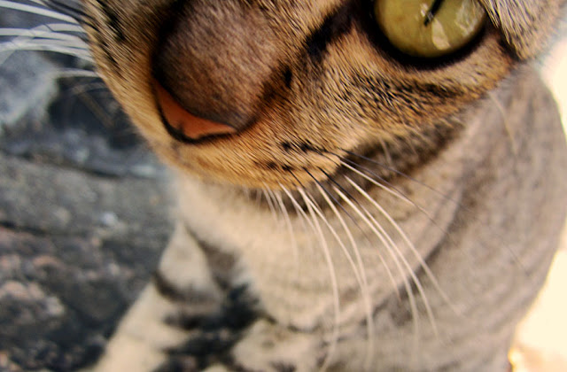 cat's yellow eye