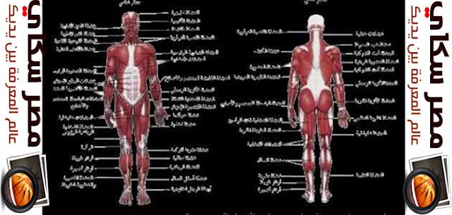 الجهاز العضلى وأنواعة  Muscular system
