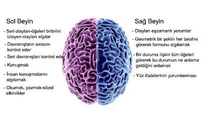 Sağ ve Sol Beynin işlevleri