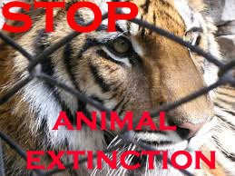 stop animal extinction!