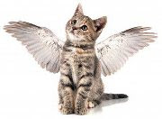 I HELP FURRY-ANGELS RESCUE COULD YOU?