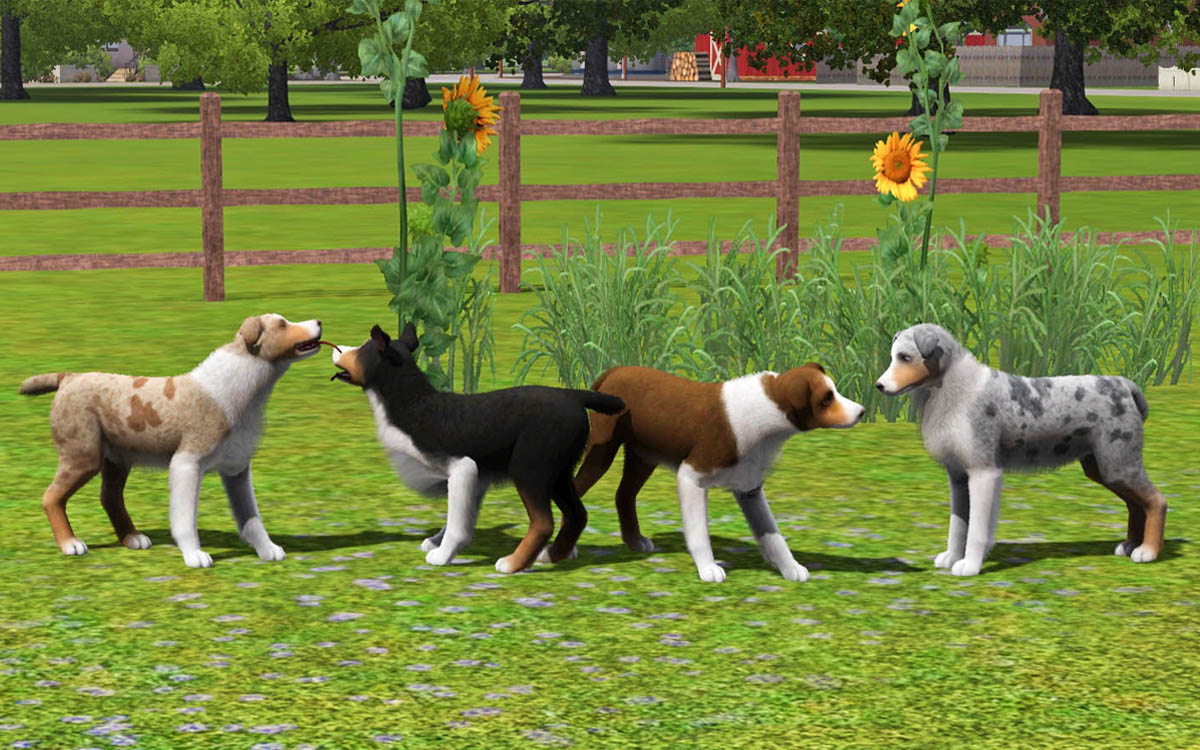 My sims 3 blog 4 improved australian shepherds by numberei8ht 4 improved australian shepherds by numberei8ht malvernweather Images