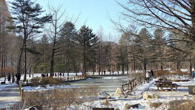 Walking into winter wonderland at Nami island