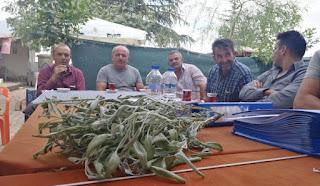 Ahırlı ve Bozkır'da adaçayı üretimi başlıyor