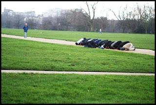 Umat muslim shalat di taman.