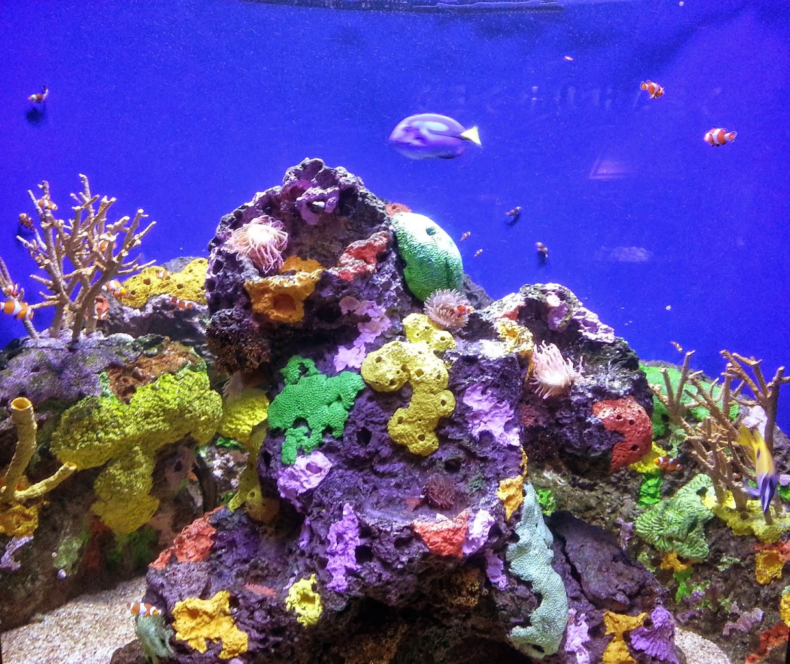 Rockhounding Around New Orleans Audubon Aquarium Of The